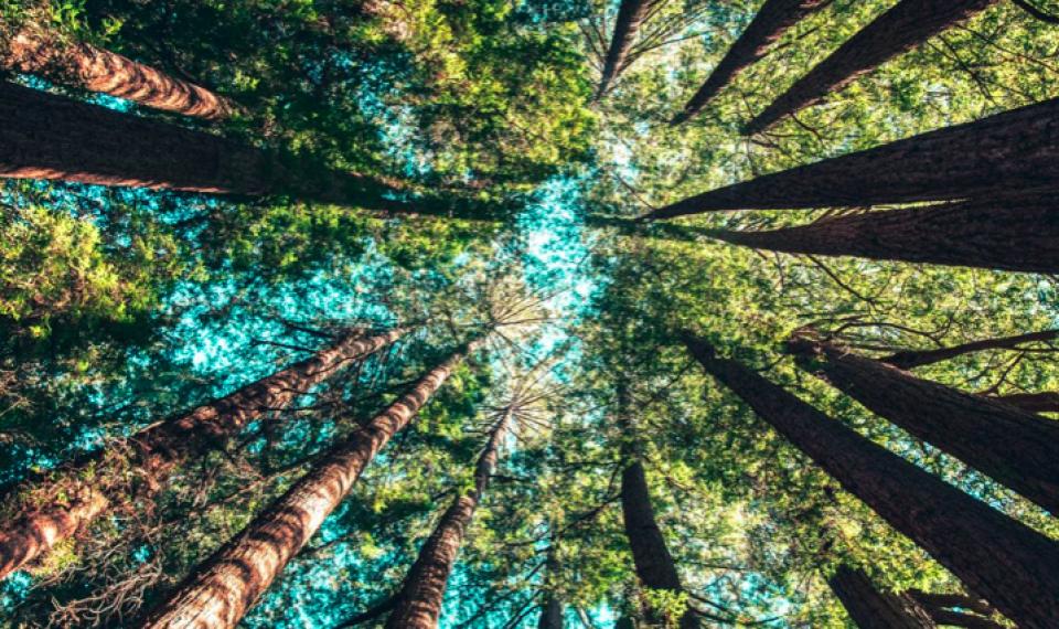 اللغة السرية للأشجار